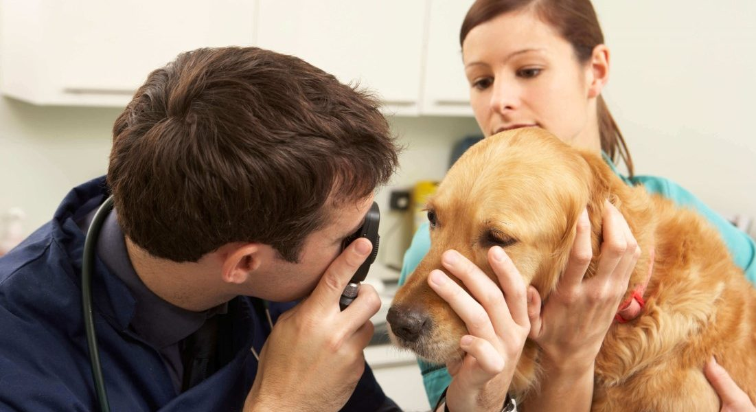 Ama os animais e quer trabalhar pertinho deles? Então saiba tudo sobre o curso de Auxiliar de Veterinário e Pet Shop do Colégio Praxis!